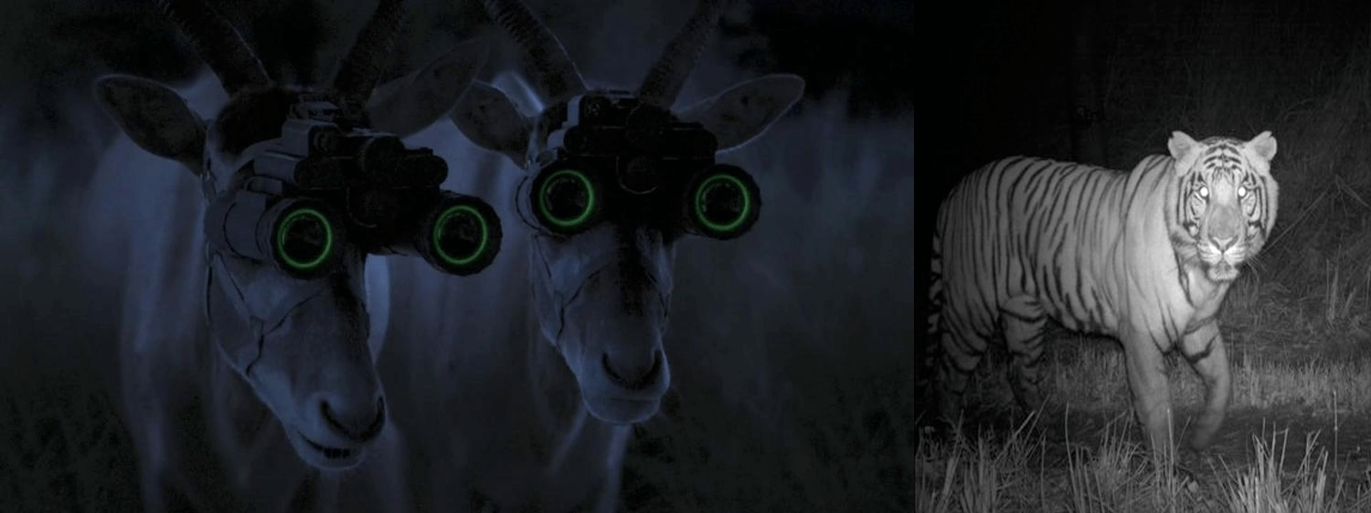 Even Antelopes use night vision binoculars to spot their predators